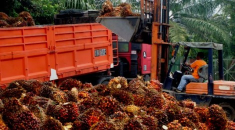 News: 12 Tonnes of Oil Palm Biomass Shipped to Italy