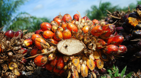 News: UMB and UPM collaborate to boost Malaysian palm oil output through R&D